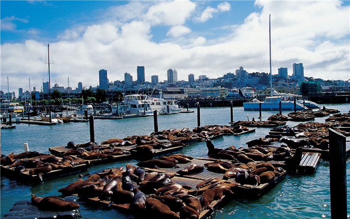 fishermans-wharf-san-francisco-top